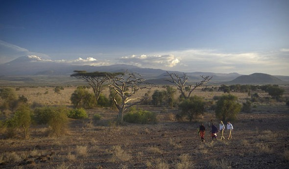 safari kilimanjaro